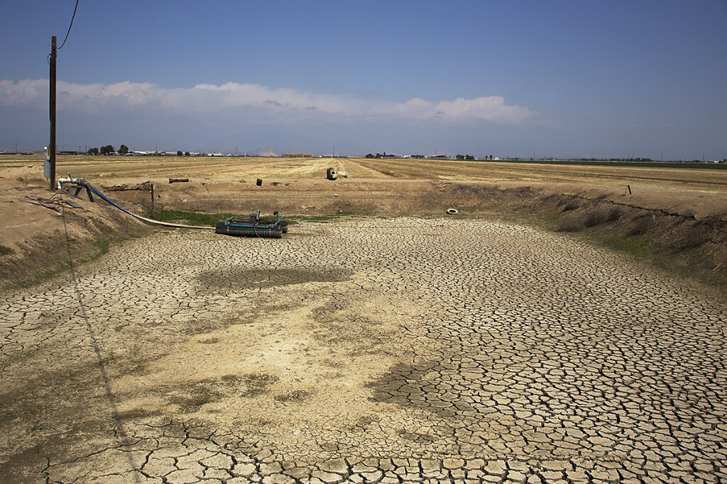 The Drought Project (Essay)